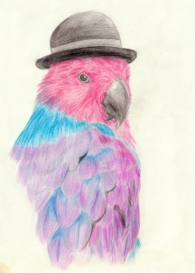 Loro Ecléctico de Salomón con sombrero