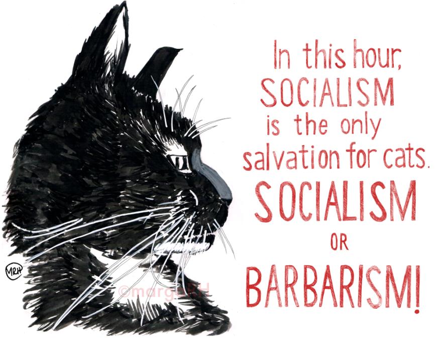 Pablo the socialist cat